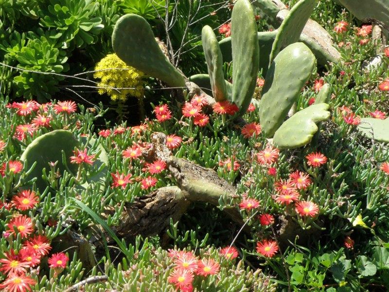 urban travel tales, spring in Greek island Kea