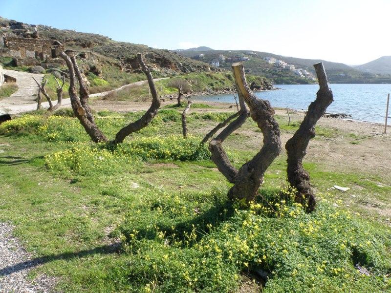 urban travel tales, spring at Greek island, Kea