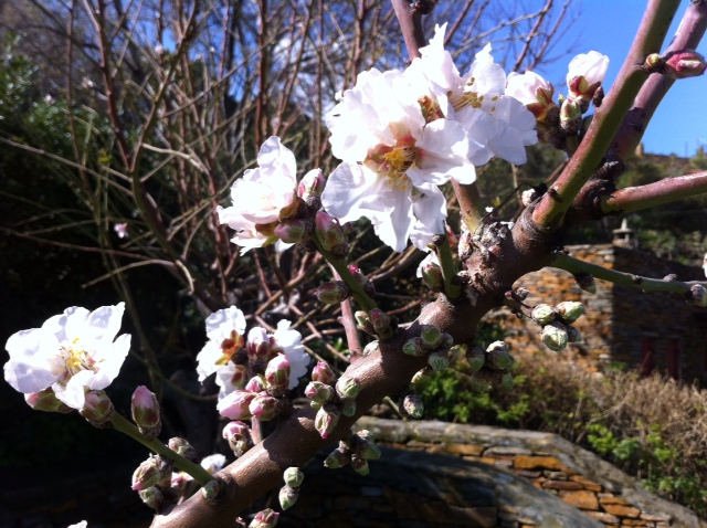urban travel tales, spring at Greek island of Kea