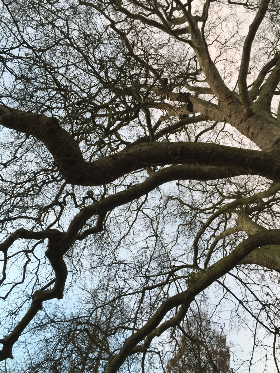 tree, branches